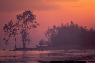 Coastal landscape in early morning. French Guiana