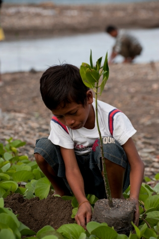 Mangrove reforestation project in Dili.