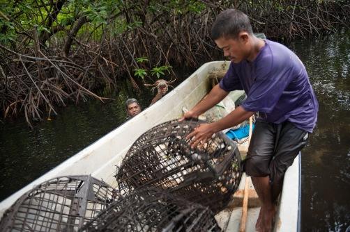 Pohnpei, NCM 09005