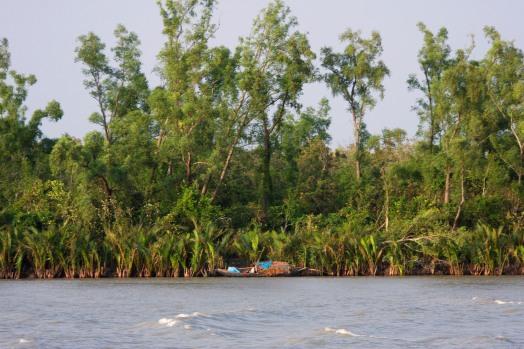 Mangrove forest, Sundarbans National Park, Bangladesh